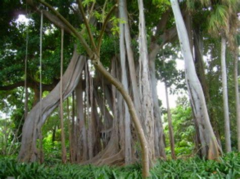 Botanischer Garten Puerto De La Cruz, Teneriffa