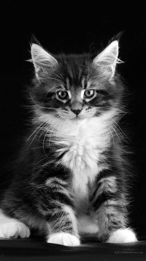 kittens full hd  wallpaper