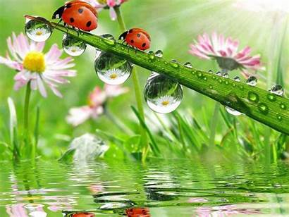 Ladybug Ladybird Wallpapers Ladybugs Catarinas Mariquitas Lady