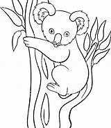 Koala Coloring Pages Cartoon Simple Drawing Goomba Bear Printable Mario Animal Moose Getdrawings Getcolorings Colori sketch template