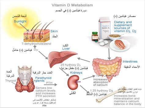 وظائف فيتامين د في الجسم