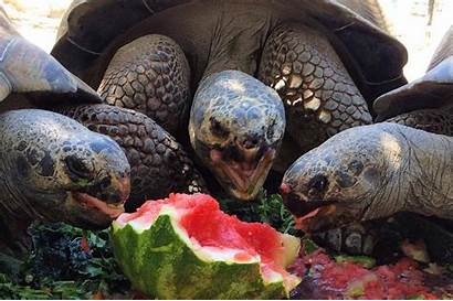 Zoo Animals Cute Adorable Too Travel Meet