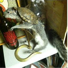 rogue taxidermy images taxidermy rogues bad