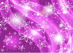 Purple Flowers With Wh...