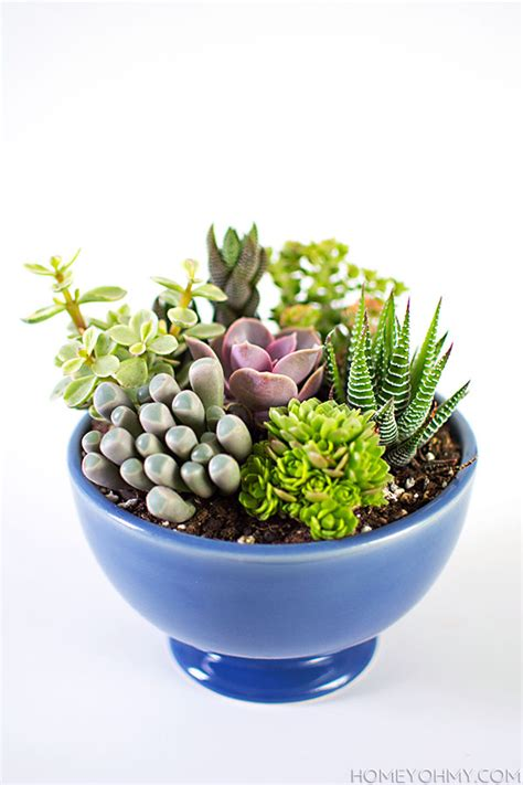 Garden Pot Arrangements by Small Succulent Garden Diy Succulent Garden Ideas Diy