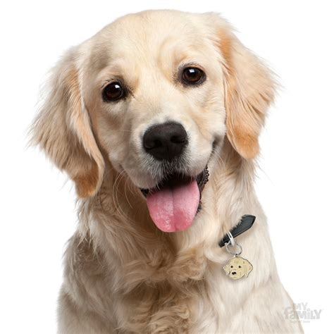 id tag  golden retriever dog myfamily