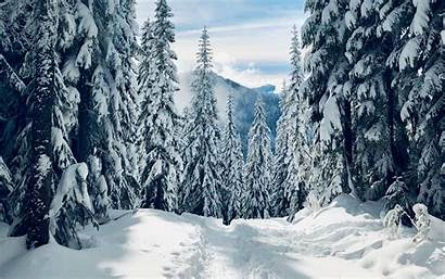 Forest Snow Winter Traces Path Trees Widescreen