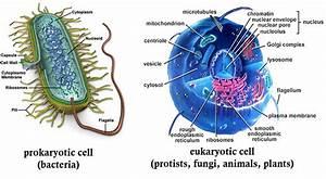 Prokaryotes Vs Eukaryotes  Sr Hs Biology