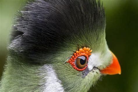 stock photo  bird parrot toucan