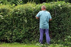 Gartenarbeit Im Februar : gartenarbeit im februar m rz ~ Lizthompson.info Haus und Dekorationen