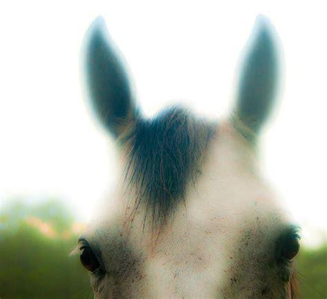 horses ears eyes horse equusmagazine