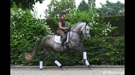 andalusian dressage pre
