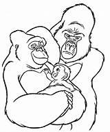Gorilas Gorille Animaisparacolorir sketch template
