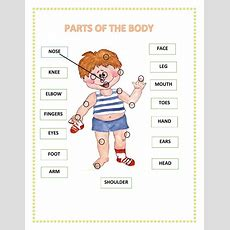 Parts Of The Body Interactive Worksheet