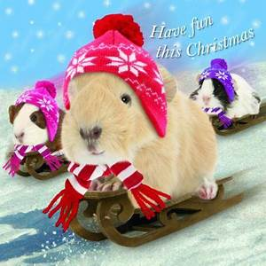 Gifts for Guinea Pig Lovers
