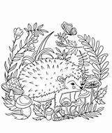 Hedgehog Coloring Printable sketch template