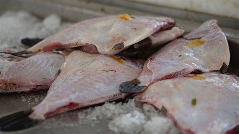 comment cuisiner le marlin plutôt langoustes ou d 39 une darne d 39 espadon découvrez le