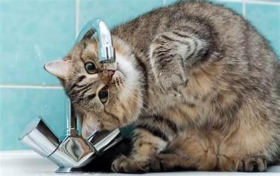 Funny Cats Cat Desktop Wallpapers Drink Wallpapersafari