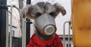 Canine Coronavirus