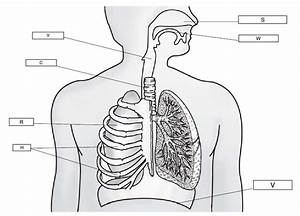 The Respiratory System  Lesson 0393