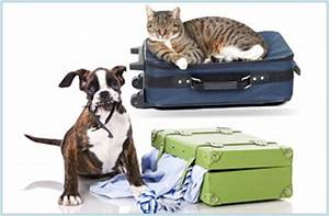 Big times kennel dayton oh call 937 885 3427 for Dog and cat boarding