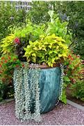 The Rainforest Garden 10 Container Gardening Ideas