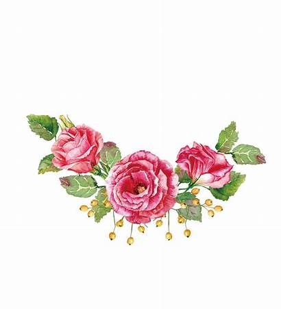 Flower Roses Flowers Watercolor Rose Transparent Painting