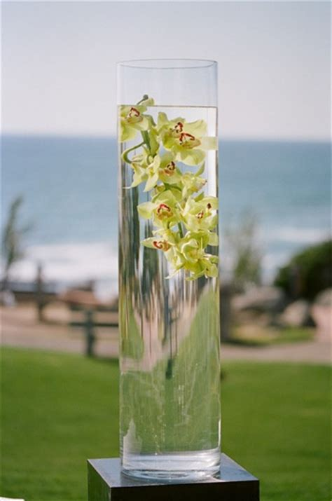 orchids  vase  water elizabeth anne designs