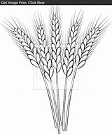 Clip Outline Wheat Stalk Drawing Stencil Mano Coloring Sketch Disegni Tattoo Ricamo Drawings Burning Colorare Pane Chicco Dal Sketches Scuola sketch template
