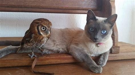 siamese cat   owl   closest  friends