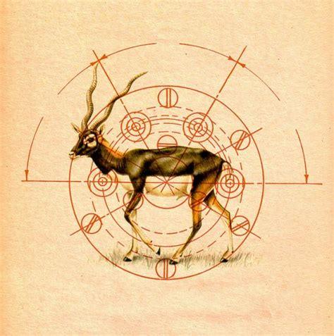 geometric animal animalia illustration art art