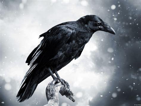 raven  wallpapers   desktop  mobile screen