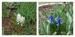 Blumen Für Sonnigen Standort : fr hlingsblumen anpflanzen und pflegen der wohnsinn ~ Michelbontemps.com Haus und Dekorationen