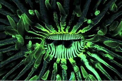 Sea Mouth Plant Too Fungia Pop