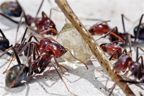 ant exterminator toronto ant control services  toronto