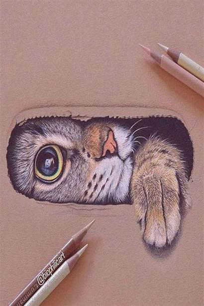 Drawing Cat Drawings Realistic Amazing Draw Cool