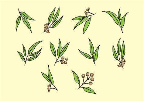 Free Eucalyptus Vector   Download Free Vector Art, Stock