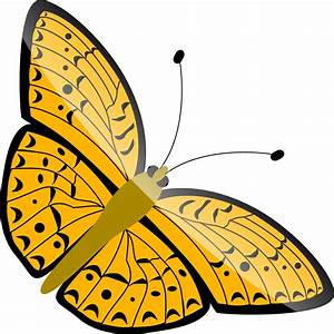Png Butterfly - ClipArt Best
