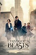 ‎Fantastic Beasts and Where to Find Them (2016) directed ...