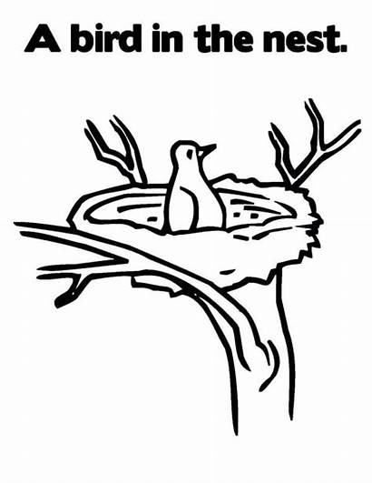 Nest Bird Drawing Coloring Pages Birds Printable