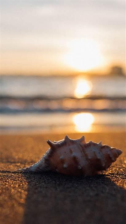 Sea Shell 2mb