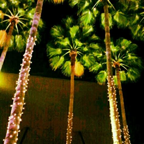 lights palm trees palm trees