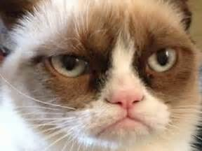 jimmyfungus the best of grumpy cat the best grumpy cat memes and gifs you will come