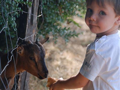 casas rurales para ir con niños mejores casas rurales para pasar la navidad un ranking de