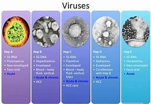 Differences bet... Hepatitis D