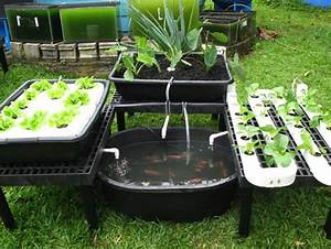 Backyard Gardening For Profit
