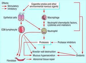 Pathology  Pathogenesis  And Pathophysiology