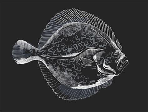 cuisiner le turbot le turbot poids durée d 39 elevage recettes atelier poisson