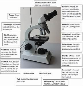Aufbau Eines Berichts : m4 aufbau eines lichtmikroskops ~ Whattoseeinmadrid.com Haus und Dekorationen