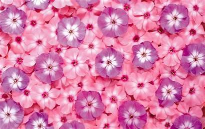 Flowers Computer Flower Desktop Background Wallpapers Purple